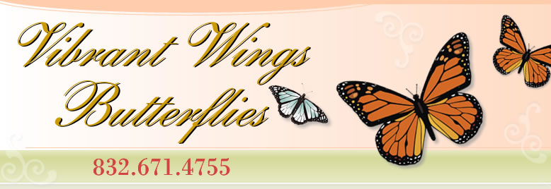 Vibrant Wings Butterflies - Call us 832-671-4755
