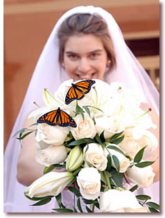 Bride With Erflies On Bouquet For Weddings